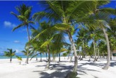 Spring - Coconut Trees (Traveltinerary)