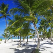 Spring - Coconut Trees (Traveltinerary)