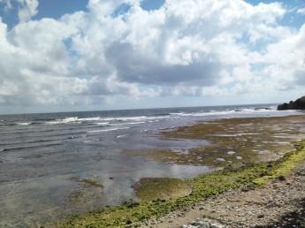 Lots of seaweed (Traveltineraries)