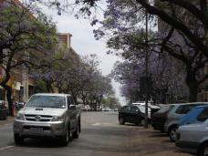 Pretoria, South Africa - Jacaranda Trees (Traveltineraries)