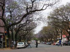 Pretoria, South Africa - Jacaranda Tree-lined Street (Traveltineraries)
