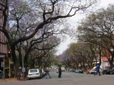 Pretoria, South Africa - Jacaranda Tree-lined Street (Traveltineraries)