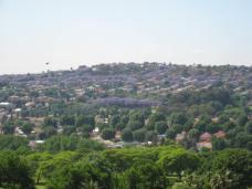 Pretoria, South Africa - Jacaranda tree tops (Traveltineraries)